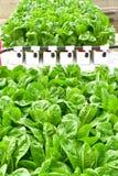 Método del hidrocultivo de crecer las plantas Imágenes de archivo libres de regalías