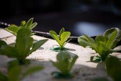 Método del hidrocultivo de crecer las plantas Imagen de archivo libre de regalías