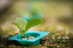 Método del hidrocultivo de crecer las plantas Fotos de archivo