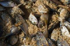 Métodos de salgar peixes Grande sal do mar e peixes pequenos Fotos de Stock Royalty Free