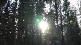 Même des coupures du soleil par les arbres dans la forêt clips vidéos