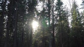 Même des coupures du soleil par les arbres dans la forêt banque de vidéos