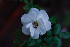 Même la fleur est une bénédiction d'âmes en nature photographie stock