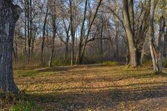 Même la promenade en parc à la rivière Photo libre de droits
