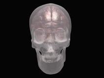 Móżdżkowa czaszka ilustracji