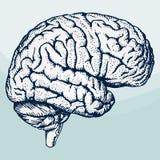móżdżkowa istota ludzka ilustracji