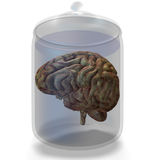 móżdżkowa istota ludzka Zdjęcia Royalty Free