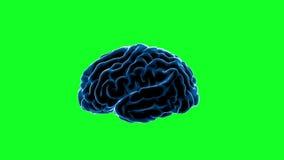 Móżdżkowi bodzowie Neuronu system Ludzka anatomia przelewanie pulsy i wywołująca informacja, zieleń ekran ilustracja wektor