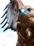 módl się ptak Obrazy Stock