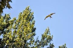 módl się ptak Fotografia Royalty Free