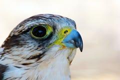 módl się ptak Obraz Stock