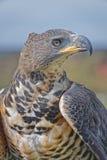 módl się ptak Zdjęcie Stock