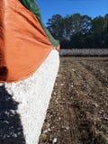 Módulo do algodão Foto de Stock