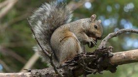 Mój acorn Zdjęcia Royalty Free