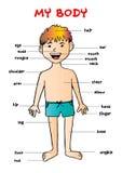Mój ciała `, edukacyjna ewidencyjna graficzna mapa dla dzieciaków Fotografia Royalty Free