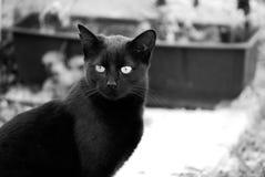 Mój czarny kot Cica Zdjęcie Stock