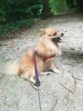 Mój enlighted pies zdjęcie royalty free