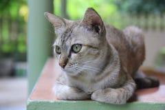 Mój kiciunia kot Zdjęcia Stock