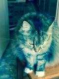 mój kot zdjęcie stock