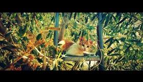 mój kot Obrazy Royalty Free