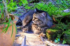 Mój kot Patrzeje Daleko od Gdy Próbuję brać Swój obrazek zdjęcie royalty free