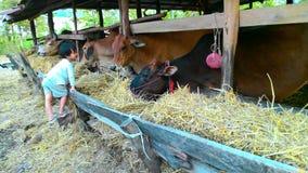 Mój krowy Zdjęcia Stock