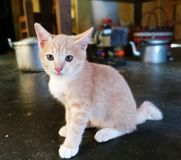 Mój mała kot miłość fotografia royalty free
