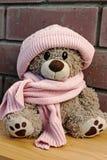 mój mały niedźwiedź fotografia royalty free