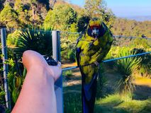 Mój papuga je obrazy royalty free