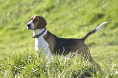 Mój pies Fotografia Royalty Free