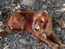Mój pies Obraz Royalty Free