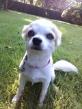 Mój pies Zdjęcia Stock