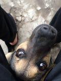 Mój pies Obrazy Stock