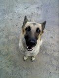 Mój pies zdjęcie stock