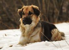 Mój pies Obrazy Royalty Free