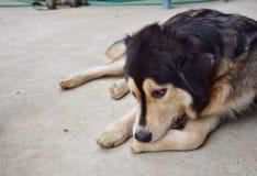 Mój pies osamotniony na podłoga Fotografia Royalty Free