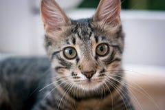 Mój sąsiedni ` s kot! zdjęcia stock