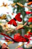 Móviles de la mariposa Fotos de archivo