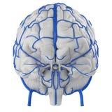 Mózg żyły ilustracji