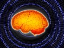 mózg obraz royalty free