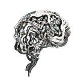 mózg obraz stock