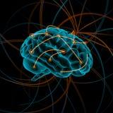 mózg bw koloru cztery ilustraci różnica ilustracja wektor
