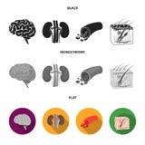 Mózg, cynaderki, naczynie krwionośne, skóra Organ ustawiać inkasowe ikony w czarnym, płaski, monochromu symbolu stylowy wektorowy royalty ilustracja