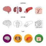 Mózg, cynaderki, naczynie krwionośne, skóra Organ ustawiać inkasowe ikony w kreskówce, kontur, mieszkanie symbolu stylowy wektoro royalty ilustracja