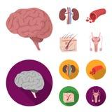 Mózg, cynaderki, naczynie krwionośne, skóra Organ ustawiać inkasowe ikony w kreskówce, mieszkanie symbolu zapasu stylowa wektorow royalty ilustracja