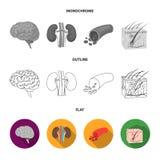 Mózg, cynaderki, naczynie krwionośne, skóra Organ ustawiać inkasowe ikony w mieszkaniu, kontur, monochromu symbolu stylowy wektor royalty ilustracja