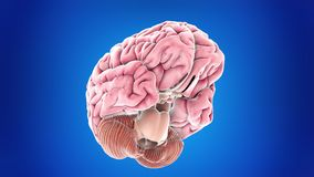 Mózg człowieka royalty ilustracja