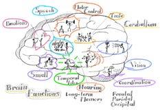 Mózg funkcjonuje wektor royalty ilustracja