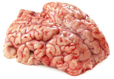 Mózg krowa Obrazy Stock
