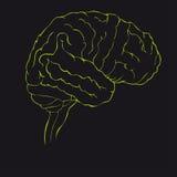 Mózg w zielonym bocznym widoku Obrazy Stock